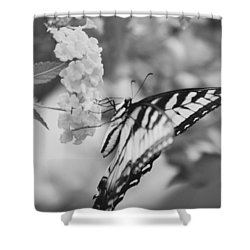 Shower Curtain featuring the photograph Black/white Butterfly by Debra     Vatalaro