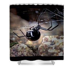 Black Widow Spider Shower Curtain by John Brink