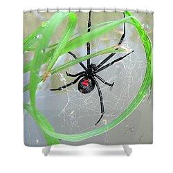Black Widow Wheel Shower Curtain by Al Powell Photography USA