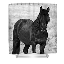 Black Wild Mustang Stallion Shower Curtain