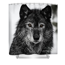 Black Wolf I Shower Curtain by Brad Allen Fine Art