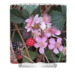 Blackberries In Bloom Shower Curtain by Michele Penner