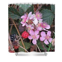 Blackberries In Bloom Shower Curtain