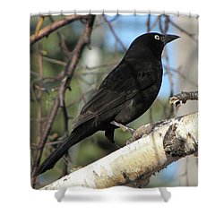 Blackbird Shower Curtain
