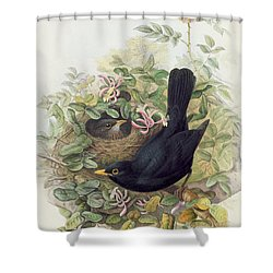 Blackbird,  Shower Curtain by John Gould