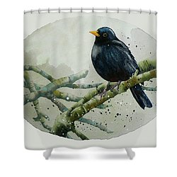 Blackbird Painting Shower Curtain by Alison Fennell
