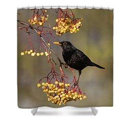 Blackbird Yellow Berries Shower Curtain