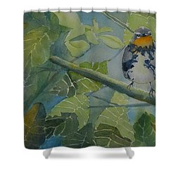 Blackburnian Warbler I Shower Curtain by Ruth Kamenev