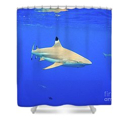 Blacktip Reef Shark Shower Curtain