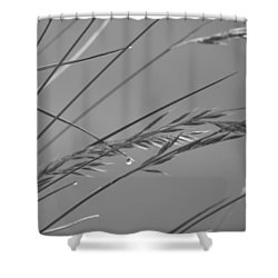 Blades Of Gray Shower Curtain