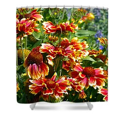 Blanket Flowers Shower Curtain by Sharon Talson