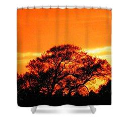 Blazing Oak Tree Shower Curtain by Karen Wiles