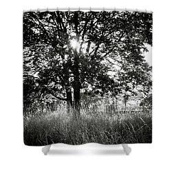 Blazing Tree Shower Curtain