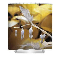 Bleeding Heart Gld Shower Curtain