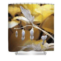 Bleeding Heart Gld Shower Curtain