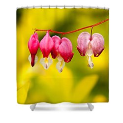 Shower Curtain featuring the photograph Bleeding Hearts by Erin Kohlenberg