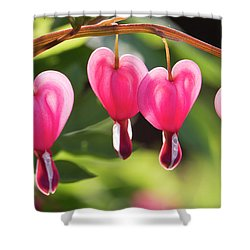 Bleeding Hearts Shower Curtain by Skip Tribby