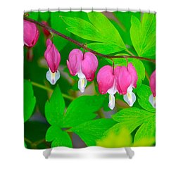 Bleeding Hearts Shower Curtain by Tiffany Erdman