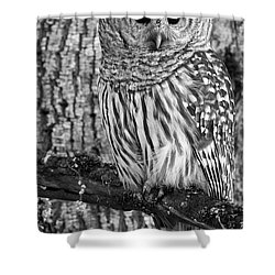 Blending In - 365-187 Shower Curtain by Inge Riis McDonald