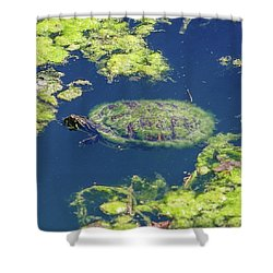 Shower Curtain featuring the photograph Blending In Turtle by Raphael Lopez
