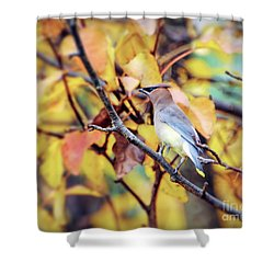 Shower Curtain featuring the photograph Blending In With Autumn - Cedar Waxwing by Kerri Farley