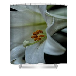 Shower Curtain featuring the photograph Blessings  by Connie Handscomb