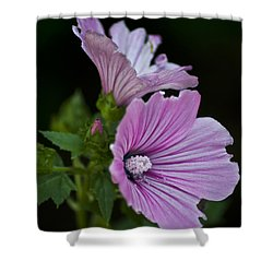 Blissful Glow Shower Curtain by Deborah Klubertanz