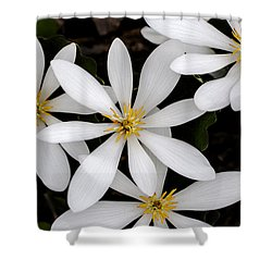 Sanguinaria Shower Curtain by Skip Tribby