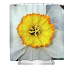 Bloom Of Narcissus Shower Curtain by Michal Boubin