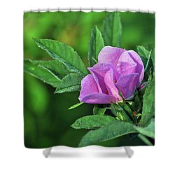 Shower Curtain featuring the photograph Bloomin by Glenn Gordon