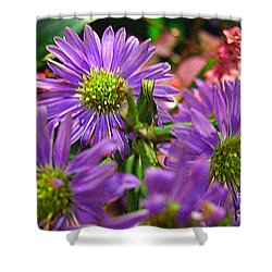 Shower Curtain featuring the photograph Blooming Asters by Merton Allen