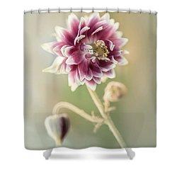 Blooming Columbine Flower Shower Curtain