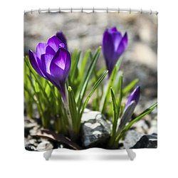 Blooming Crocus #1 Shower Curtain