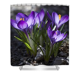 Blooming Crocus #2 Shower Curtain