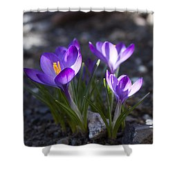 Blooming Crocus #3 Shower Curtain