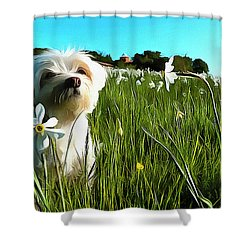 Blooming Daffodils In The Antola Park With Maltese I Paint Shower Curtain