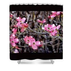 Blooming Dogwood And Pine Shower Curtain