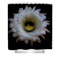 Blooming Echinopsis Candicans Shower Curtain
