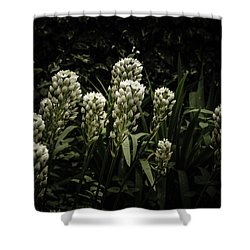 Shower Curtain featuring the photograph Blooming In The Shadows by Marco Oliveira