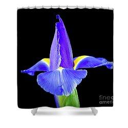 Blooming Iris 1318-1 Shower Curtain