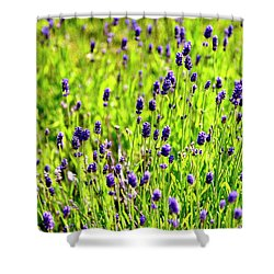 Shower Curtain featuring the photograph Blooming Lavender by Jerry Sodorff