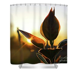 Blooming Lilac At Sunset Shower Curtain