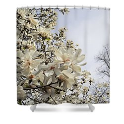 Blooming Magnolia Stellata Star Magnolia Tree Shower Curtain