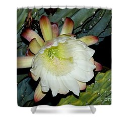 Blooming Night Cereus Shower Curtain