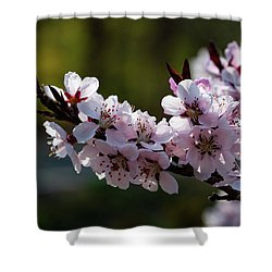 Blooming Peach Tree Shower Curtain