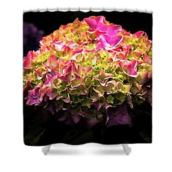 Blooming Pink Hydrangea Shower Curtain by Onyonet  Photo Studios