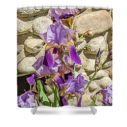 Shower Curtain featuring the photograph Blooming Purple Iris by Sue Smith