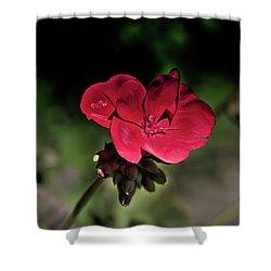 Blooming Red Geranium Shower Curtain