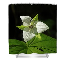 Shower Curtain featuring the photograph Blooming Trillium by Mike Eingle