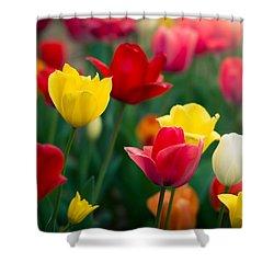 Blossom Shower Curtain by Johan Hakansson